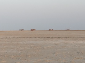 A train of camels crossing the salt desert